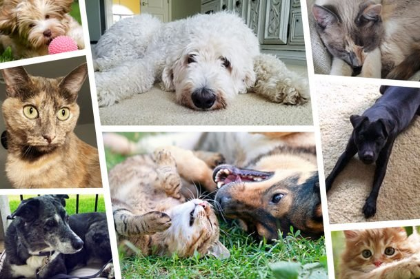 collage of different dogs and cats